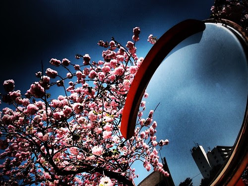 ドラマチック八重桜!