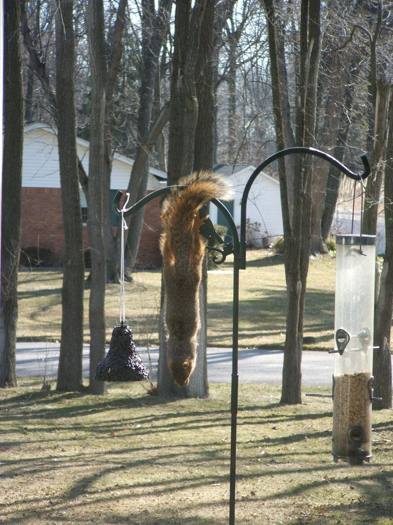 Squirrel by Angie Ouellette-Tower for godsgrowinggarden.com photo 006_zps190989cd.jpg