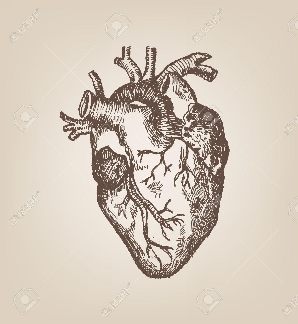 Human Heart Hand Sketch Style. Vintage Editable Clip Art. Royalty ...