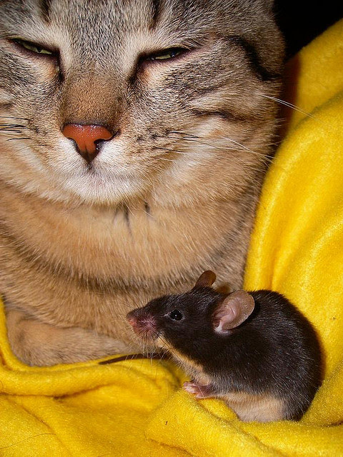 Friendship animals.  Cat and mouse