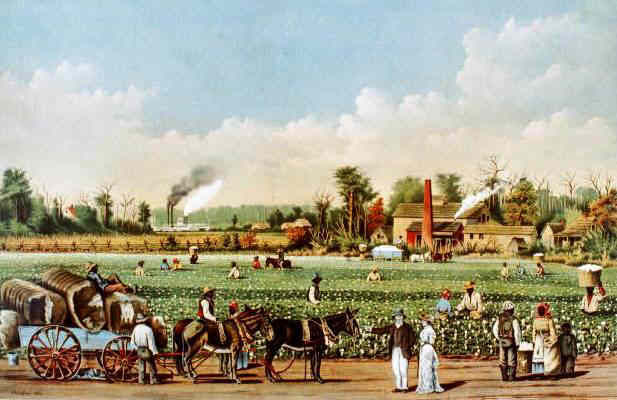 Cotton Plantation - Plantations