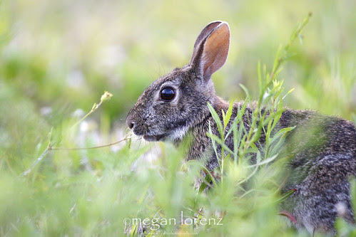 I See Somebunny by Megan Lorenz