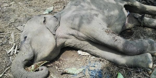 Rangers who poison elephants should be fired and jailed