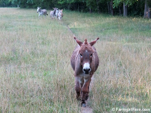 (9) Donkey Doodle Dandy in Donkeyland - FarmgirlFare.com