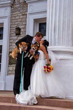 1000  images about Corgis, Engagements & Weddings! on