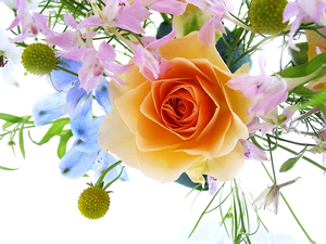Free Flower Wallpaper For Desktop Beautiful Flowers Free Images At Clker Com Vector Clip Art Online Royalty Free Public Domain