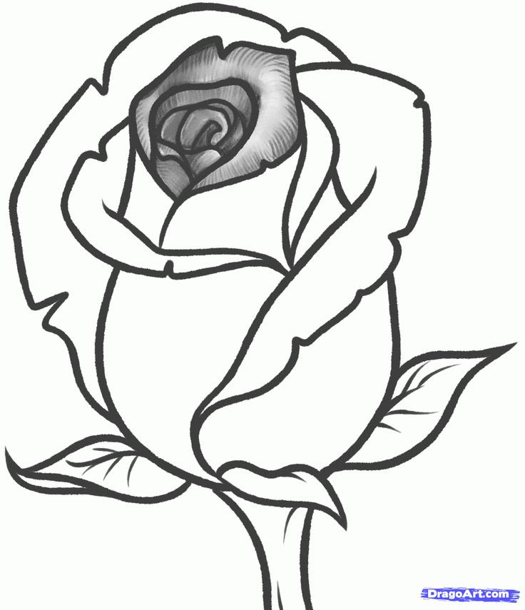 Simple Rose Flower Drawing Images