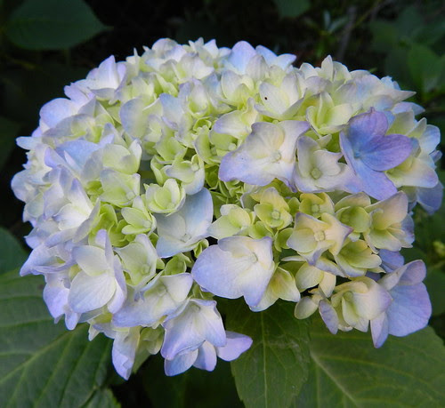 todayflowersDSCN7455