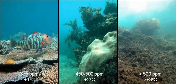 comparación a travez del tiempo de la acidificación de los oceanos