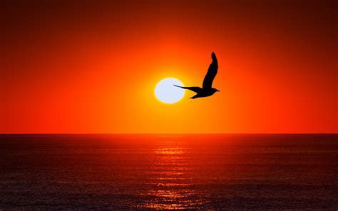Wallpaper Sunset, Horizon, Bird, Silhouette, 4K, Nature