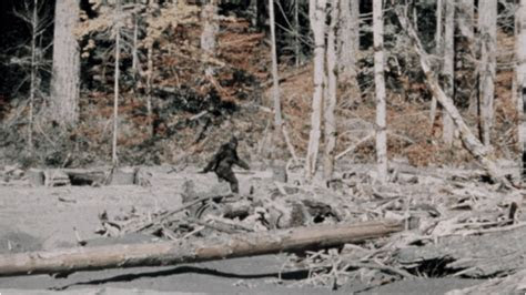 The 10 Most Convincing Bigfoot Sightings   Outside Online