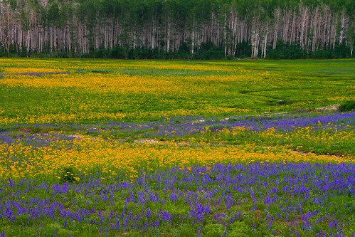 Mountain flowers-4.JPG