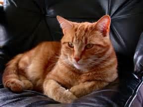 chat relaxant fonds decran  fonds decran