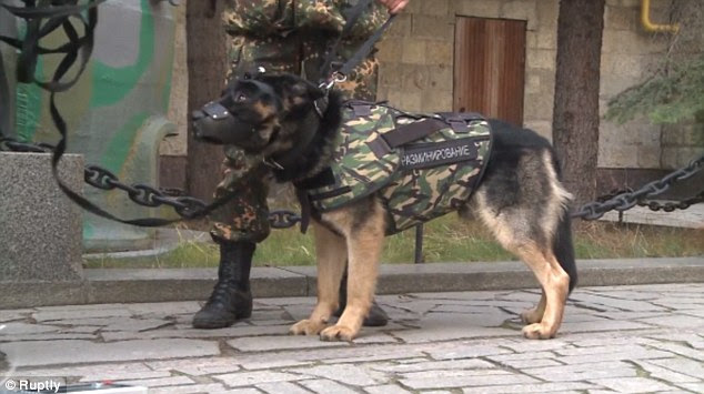Αστυνομικοί σκύλοι με αλεξισφαιρα γιλέκα