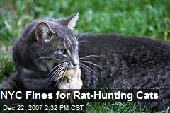 NYC Fines for Rat-Hunting Cats