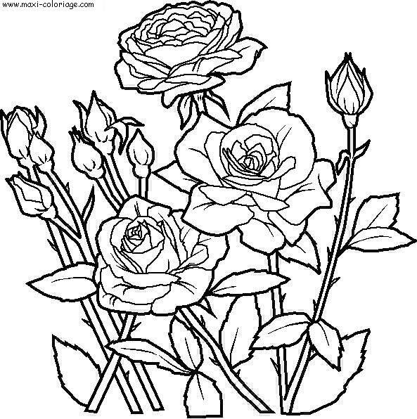cara mewarnai gambar bunga tulip