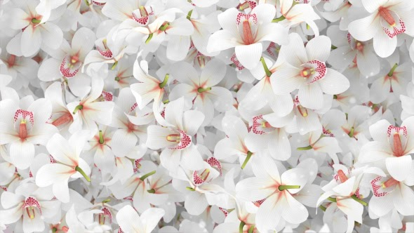 Flowers Orchid White Background - Motion Graphics ...