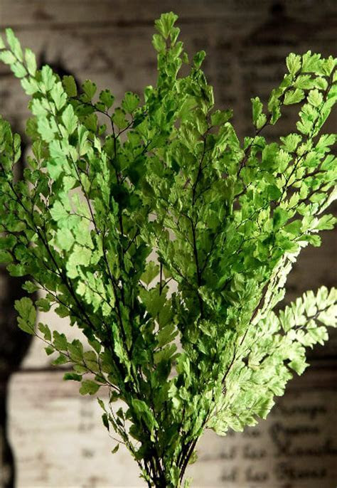 Preserved Ferns Lime Green 8in   8 stems