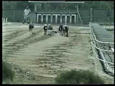 Palm Beach Greyhound Replays