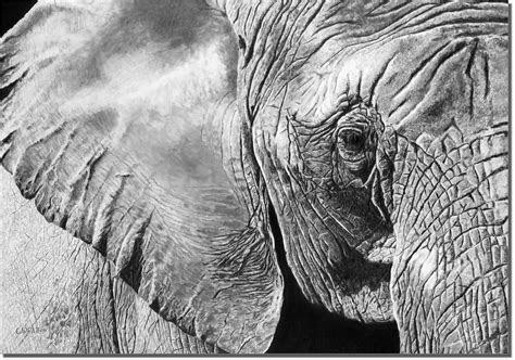 matriarch elephant drawing owen garratt pencil