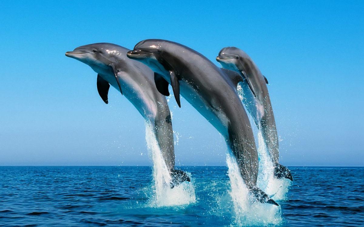 Quem são mais inteligentes, os cães ou os golfinhos?