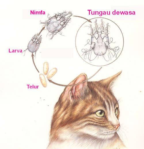 51 Koleksi Gambar Daur Hidup Hewan Kucing Gratis