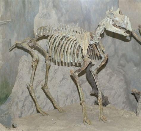 Badlands National Park, Part 5: upper Brule fossils   Updates from the Paleontology Lab