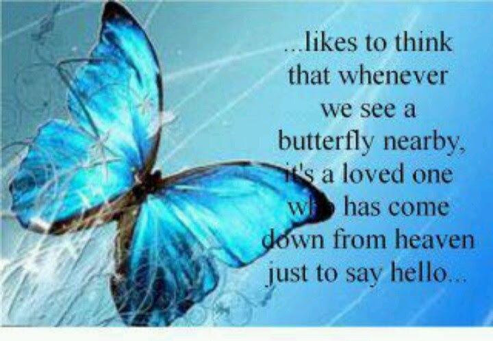 Quotes About Free Butterflies 27 Quotes