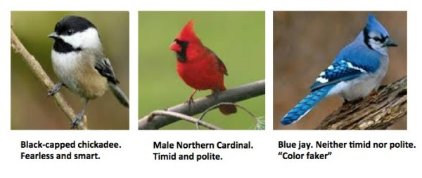 Blue Birds Arent Blue And This Is How They Fool You American