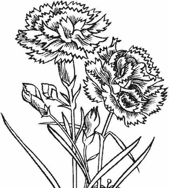 gambar mewarnai bunga anggrek