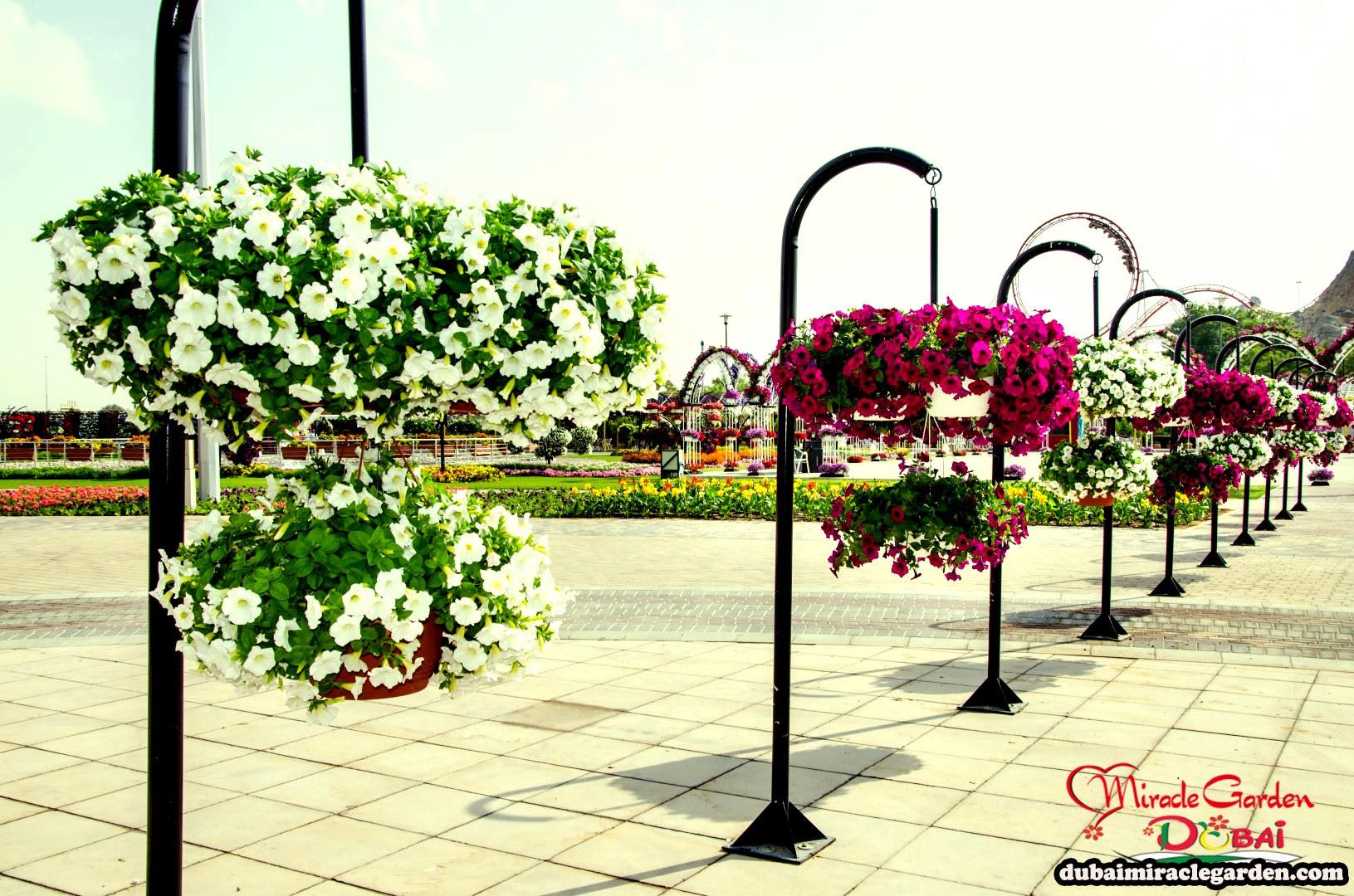 Dubai Miracle Garden 17
