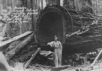 One Log House