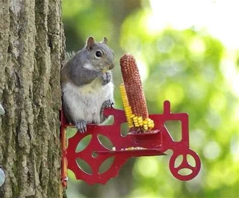 Tractor Squirrel Feeder   Gifts For Men