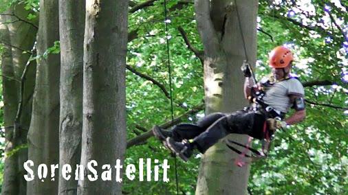 Tree Climbing up-and-down / Tree climb
