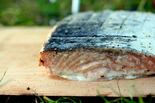 Planked salmon on a plank