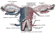 nuegivilta: Wie lange krank nach gebärmutterentfernung