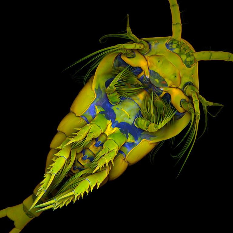 Inilah foto foto kehidupan dalam setetes air Mahluk-Mahluk Dalam Setetes Air