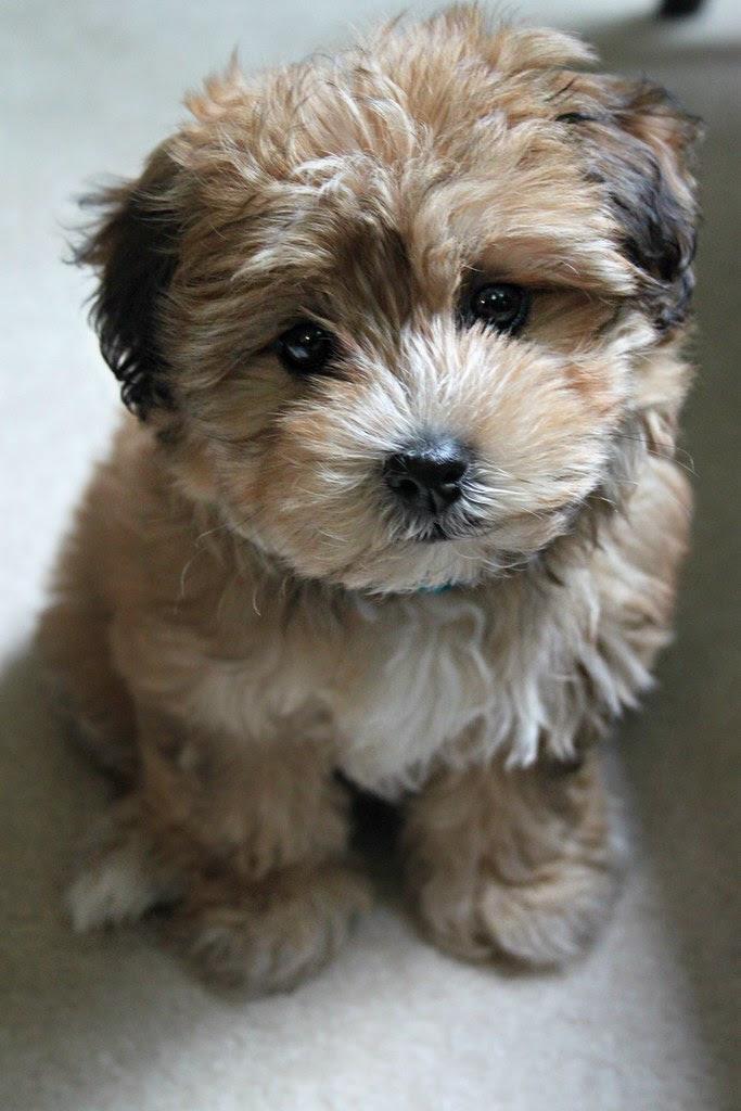 penny cuteness