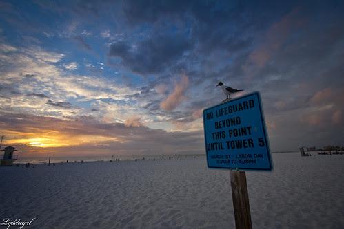 seagull sunset-1.jpg