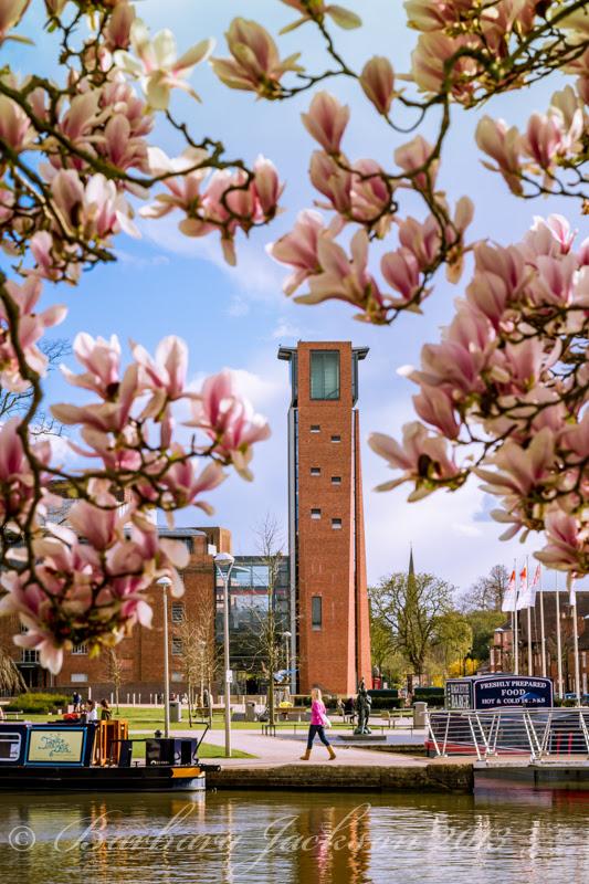 RSC and magnolia