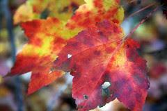 leaves 19
