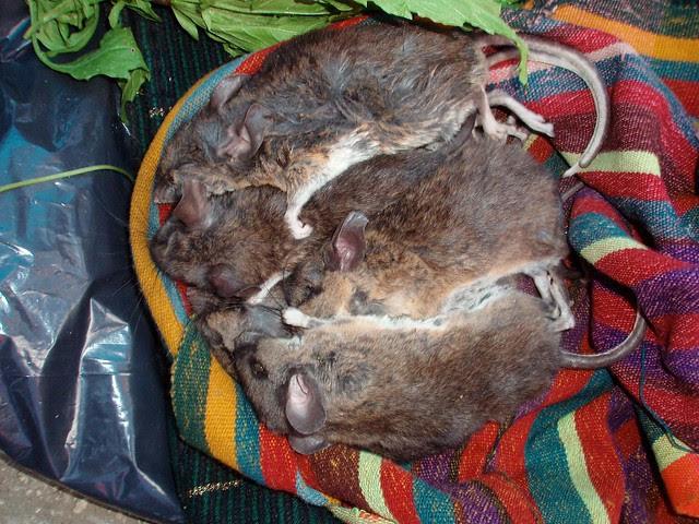 Rats for sale in market - ratas de venta en el mercado; Santo Tomás Oxchuc, Chiapas, Mexico