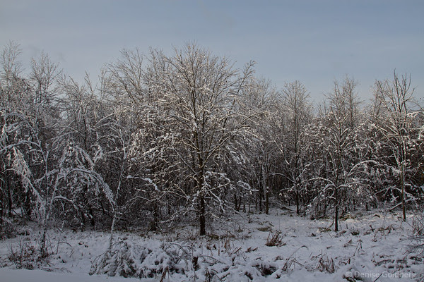trees coated in snow, a winter wonderland in October