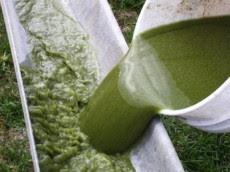 Biocarburanti: alghe, urina cioccolato e acqua sporca