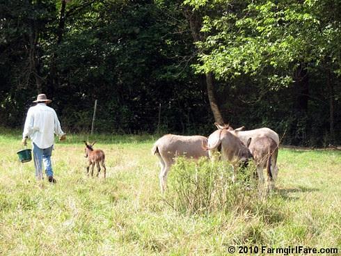Joe and donkeys 1