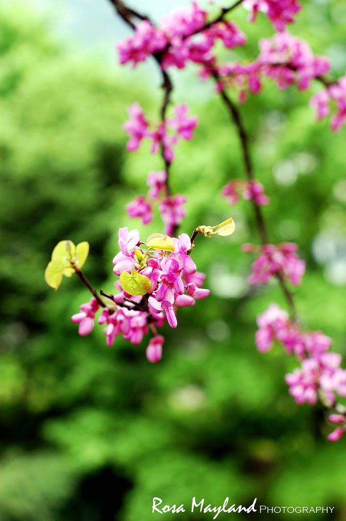 Spring 2013 May 4 2 bis