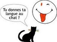 Wyrażenia z wyrazem kot - nagłówek - Francuski przy kawie