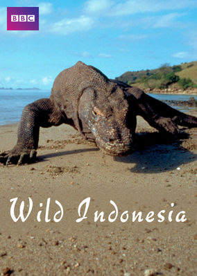 Wild Indonesia - Season 1
