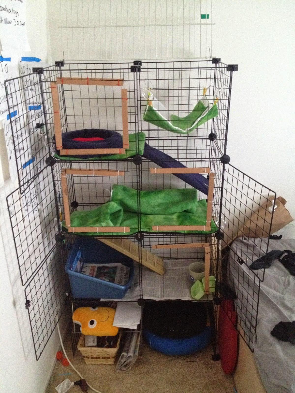 Diy Ferret Cage Toys - Clublifeglobal.com
