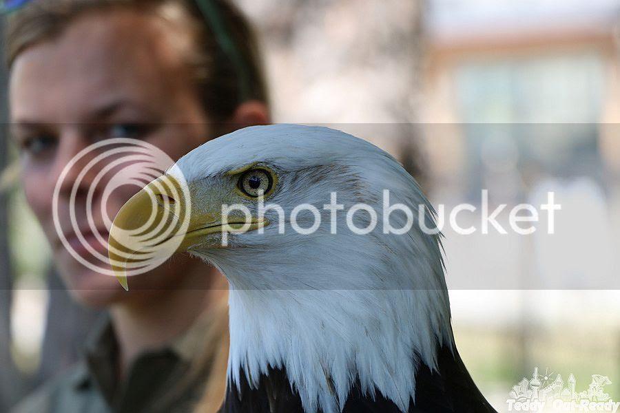 Eagle Toronto